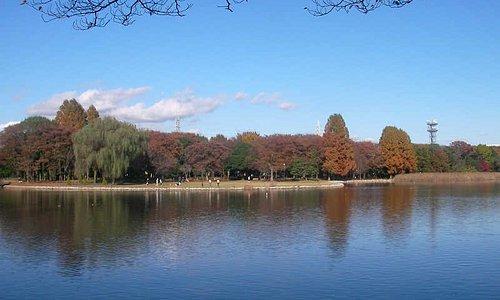 大きな池には人懐っこい魚や鴨、アヒルなど