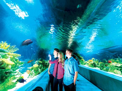 Great Barrier Reef Tunnel