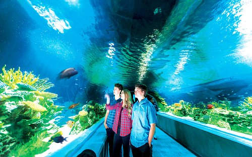 Great Barrier Reef Tunnel