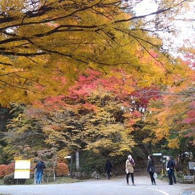 城山公園入り口付近の紅葉。外人さんの姿が多かったです。