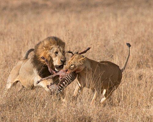 Fight over dinner