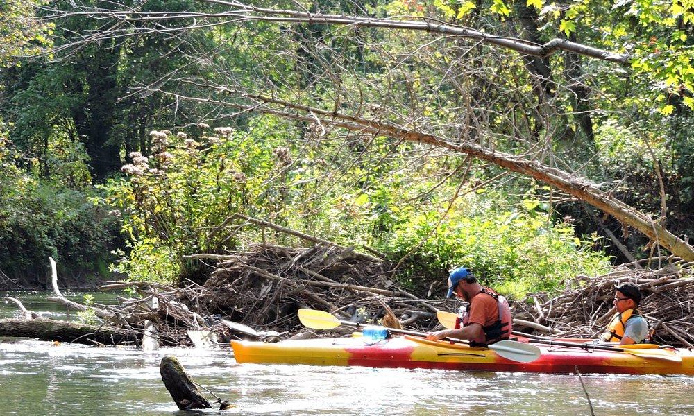 Kayaking on Big Creek