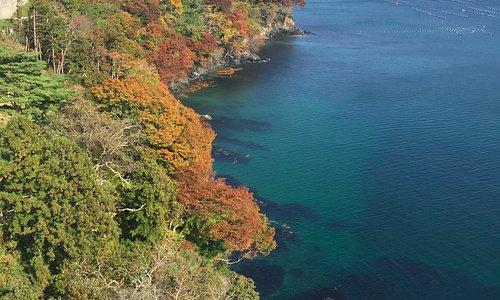 敷地内海沿いの紅葉
