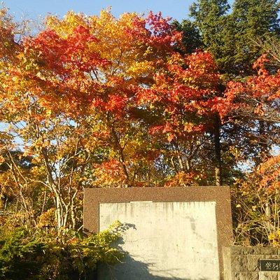 隣の駐車場の紅葉もきれい