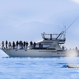 61' Ocean Cruiser, Marauder IV with Killer Whale, SpringTide Whale Watching, Victoria BC