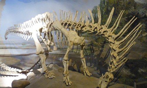 museo paleontologico recorrido