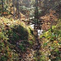 Fall in Pretty River Valley