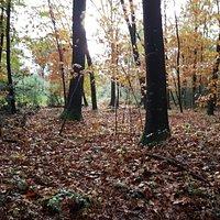Ruisseaux et forêt