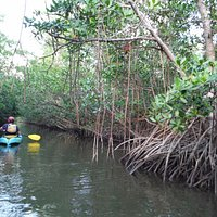 Mangrove trails