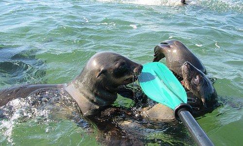 Seals love interaction