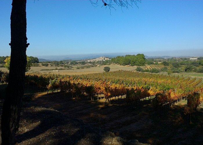 Vista de una vinya del recorrido en otoño, con el Vilosell al fondo