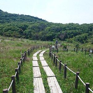 湿原の木道を歩く