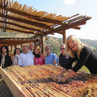 Visitantes de vendimia moliendo uva en Zaranda  - visitors hand crushing grapes during the vinta