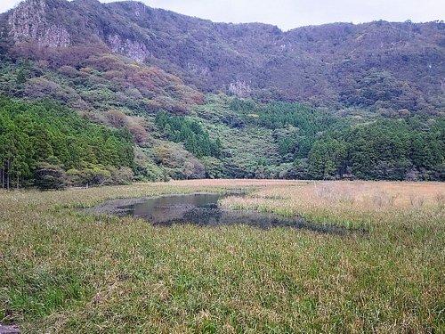 湿原のような池