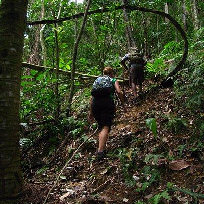 Climbing El Cerro del Aripo