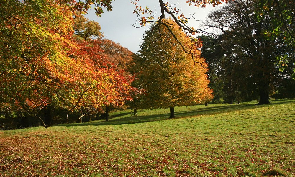This was taken in Levens Hall Park near Milnthorpe in Cumbria