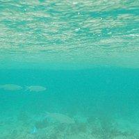 ウカビ島 海中の様子