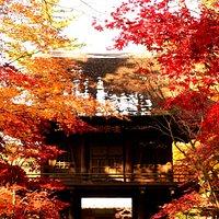 総門から紅葉が覆う山門を観る