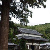 安国寺の大きな杉と仏殿です