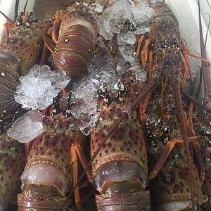 lagostas enormes aos sábados