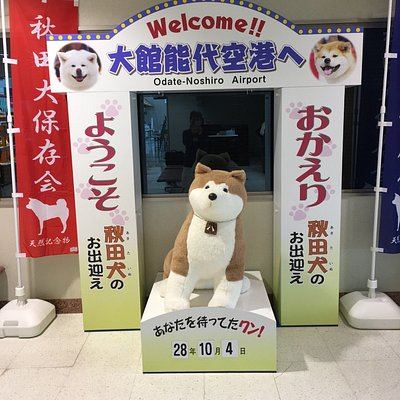 秋田犬のお迎え