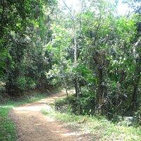 Caminho que leva ao início das trilhas.