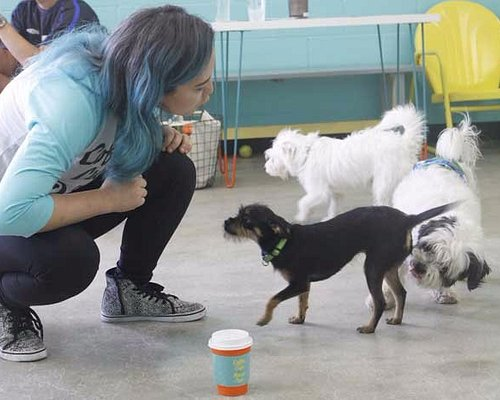 Coffee cups and rescue pups!