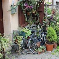 kapı önü çiçekleri