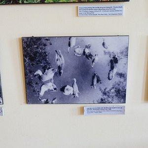 ベトナム戦争(現地ではアメリカ戦争)当時の報道写真
