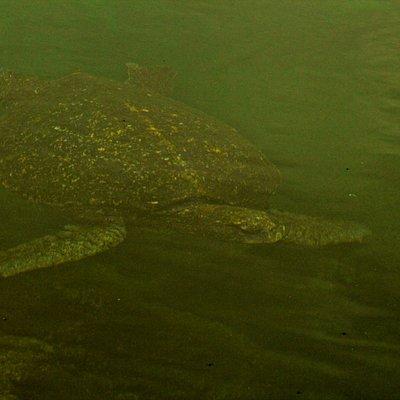 Visita de los tuneles (actividad de Snorkeling a partir de la Isla Isabela)
