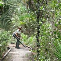 Park Ranger Clearing Trail Churchhouse Hammock