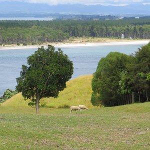 Hiking Mt. Maunganui, Bay of Plenty