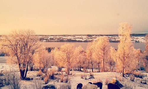 #winterhorses