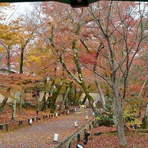 Garden outside Hogonin Temple