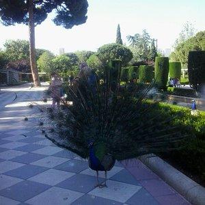 Jardines de Cecilio Rodríguez - El Retiro