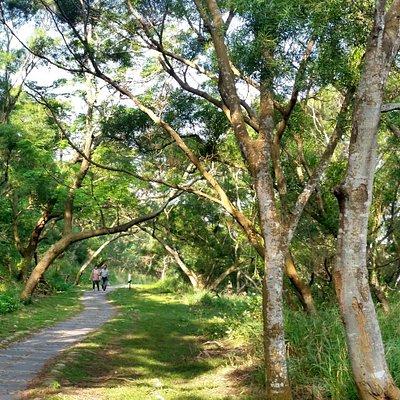 竹坑-南寮登山步道