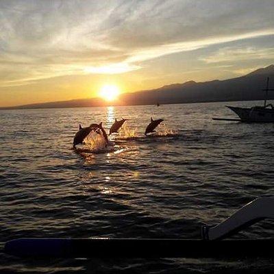 Kemunculan Dolphin di pagi hari di pantai Lovina