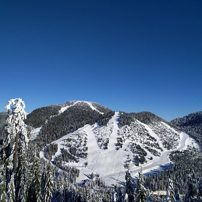 view of some of the runs