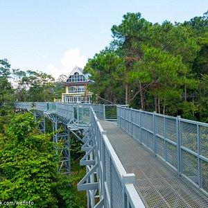 สะพานเรือนยอดไม้@สวนพฤกษศาสตร์สมเด็จพระนางเจ้าสิริกิติ์