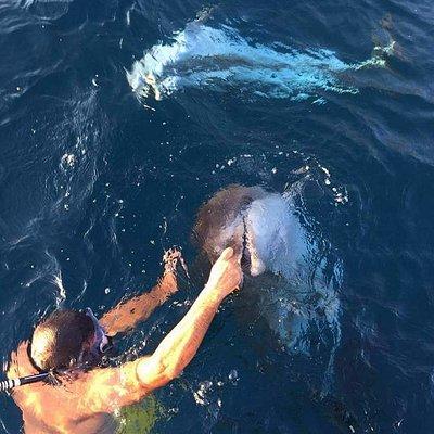 luigi che fa il bagno con i Delfini. Le nostre escursioni a Golfo Aranci.
