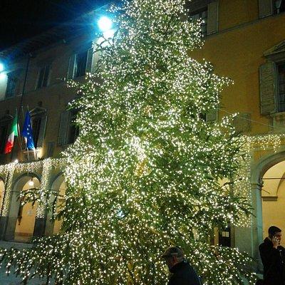 splendido albero natale 2016 nella piazza
