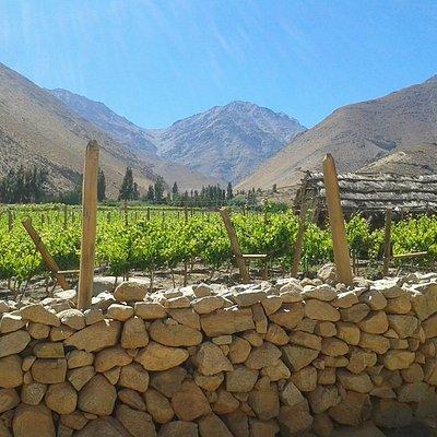 Cielo, montañas y viñas.
