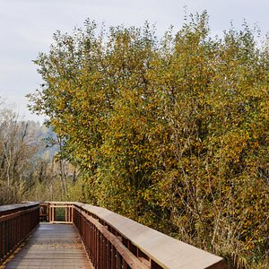 A boardwalk trail to view this scenic wetland park.