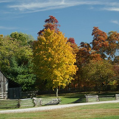 Trees in the Fall at Faust Park