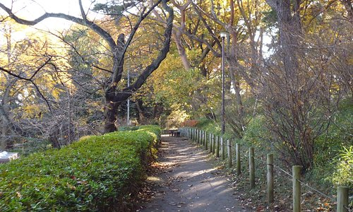 多摩川台公園の遊歩道