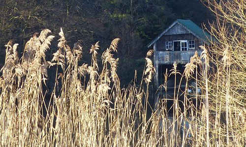 boathouse through the reeds