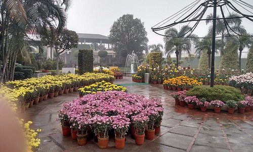 A view of garden