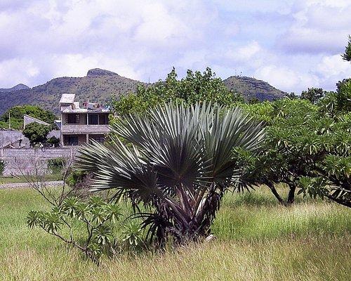 more endemic plants