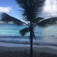 Palm Tree on Solomon Beach