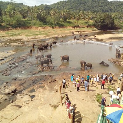 Elephants enjoying a dip...